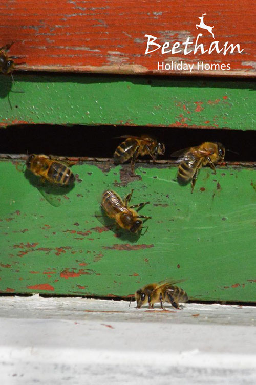bees1a